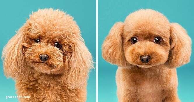 Como os cães mudam depois de uma bela tosa