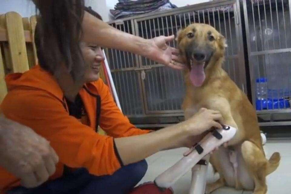 Cão que teve patas amputadas com espada vibra ao receber próteses