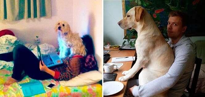 Cães folgados que não se importam com a privacidade de seus donos