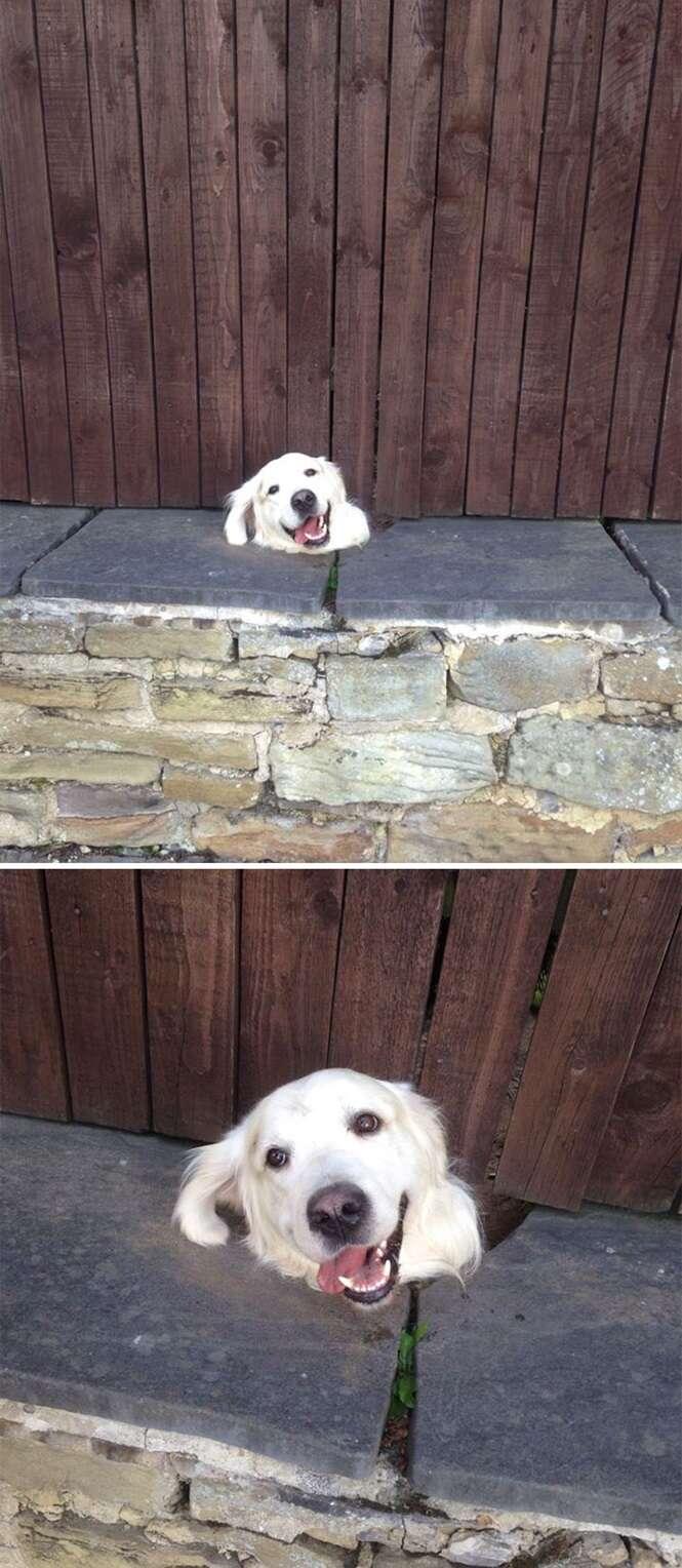 Cães que não param de se meter em confusão