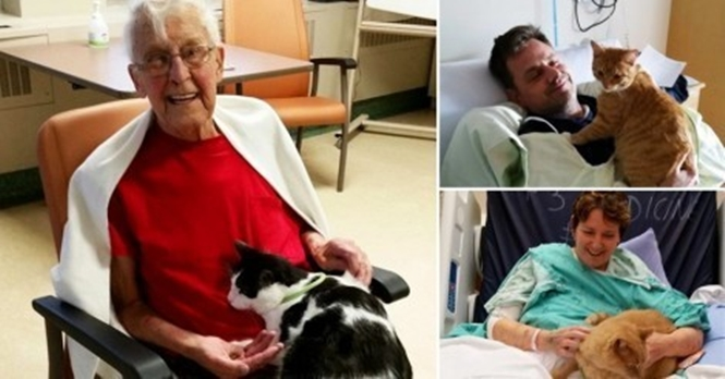Hospital permite que animais de estimação visitem seus donos doentes