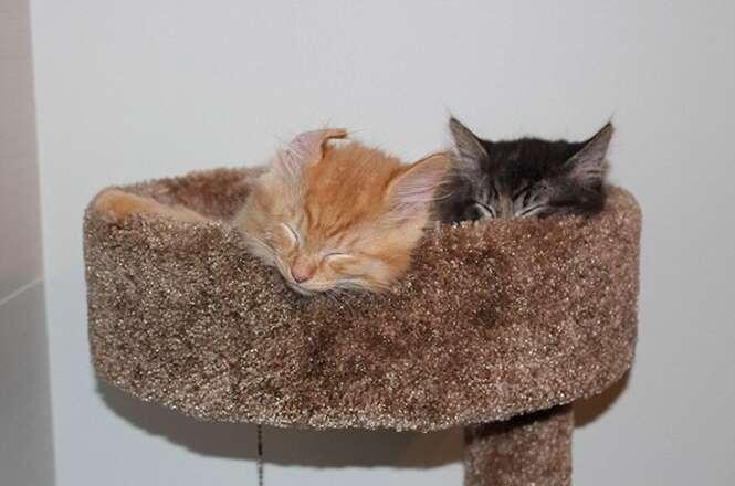 Gatos inseparáveis insistem em dormir juntos, mesmo depois de crescerem