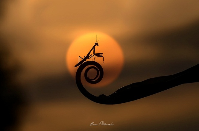Foto: © Boim Wahyudi
