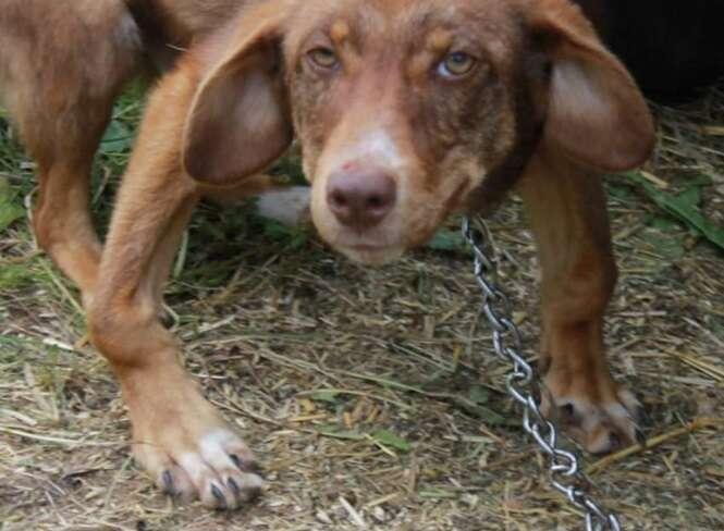 Foto: Rudozem Street Dog Rescue