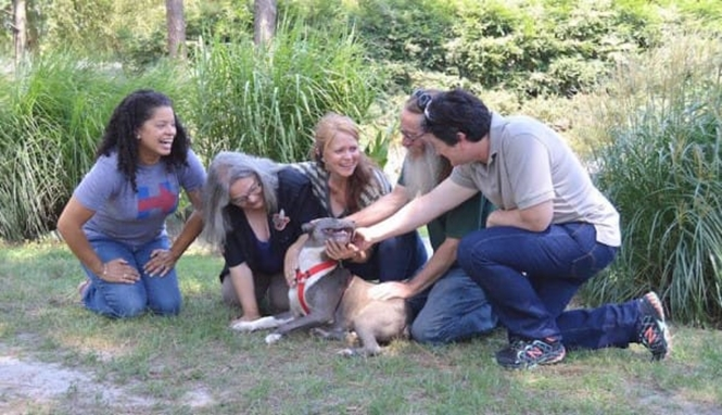 Foto: Go Rescue Pet Adoption Center