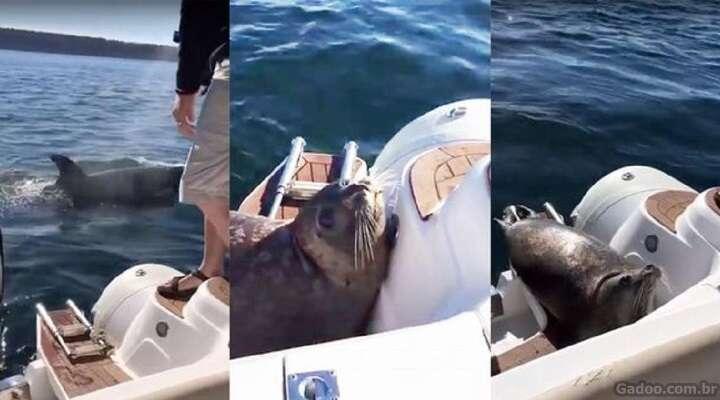 Foca desesperada sobe em barco para escapar de baleias assassinas
