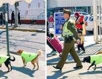 """Cães de rua no Chile ganham """"emprego"""" e abrigo"""