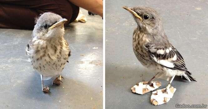 Esse pobre pássaro recebeu de volta seus pés graças a uma improvisada prótese