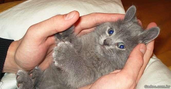 Imagens provando que os gatos são animais multifacetados