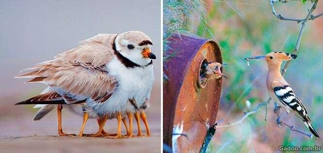 Fotos fascinantes de aves cuidando de seus filhotes