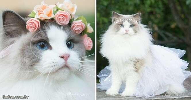 Conheça Aurora, a gata que é uma verdadeira princesa
