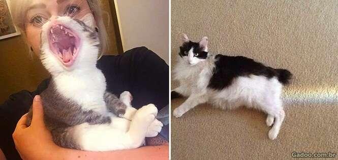 Imagens hilárias mostrando gatos no lugar certo e na hora certa