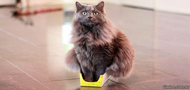 Gatos provando que podem caber em qualquer lugar