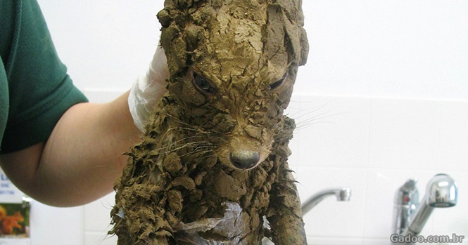 Esse animal misterioso foi encontrado na lama e só foi identificado após ser limpo