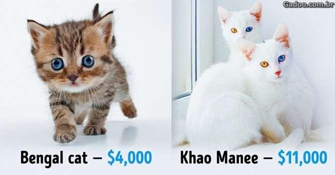 Gatos fantásticos que custam uma verdadeira fortuna
