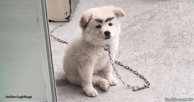 Cães com o pêlo estranhamente colorido