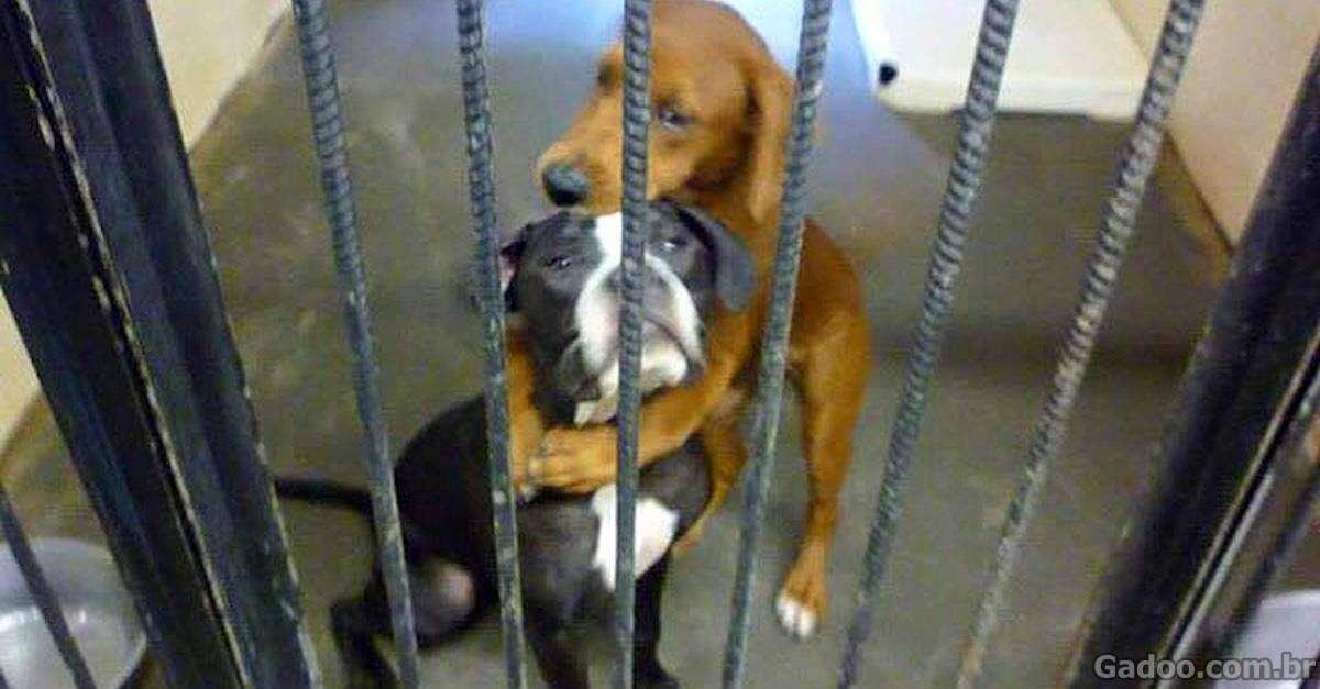 Cães de abrigo são adotados pouco antes de serem sacrificados