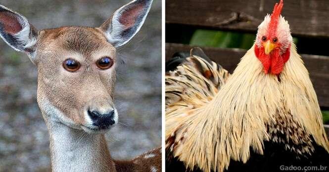 Animais que seriam bem estranhos se tivessem os olhos na frente