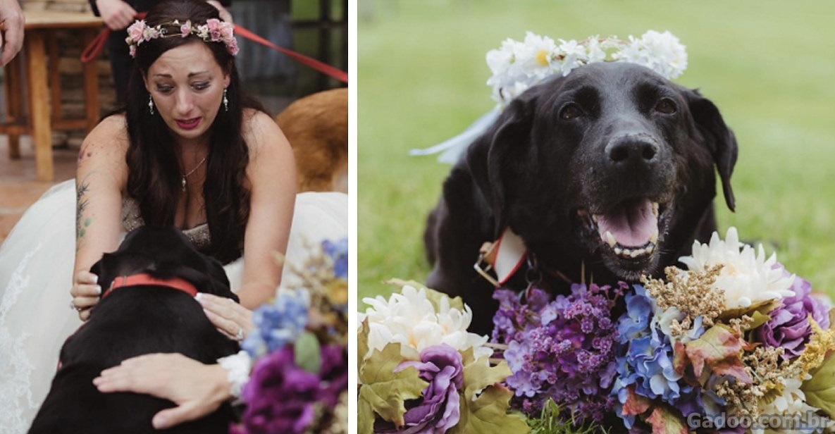Este cão de 15 anos viveu o suficiente para ver sua dona se casar