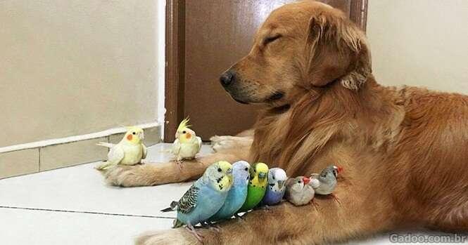 Fotos provando que os cães são os mais fiéis amigos