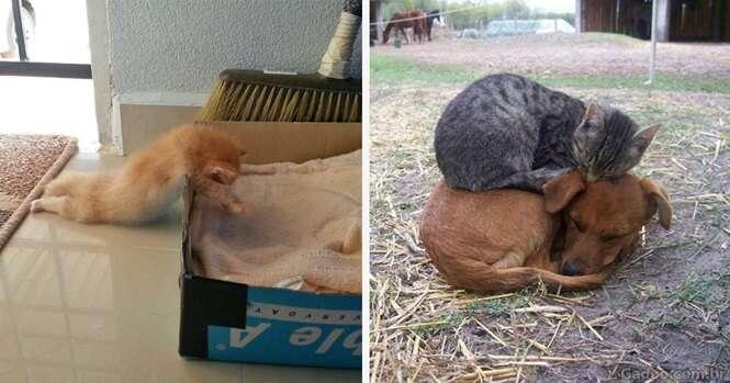 Imagens que provam que os gatos podem dormir muito bem em qualquer lugar