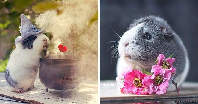 Conheça Mieps, o porquinho-da-índia mais fofo que você já viu