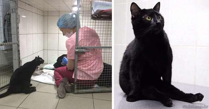 Gato que não pode andar se torna enfermeiro de animais doentes