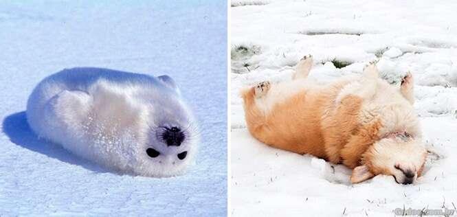 Fotos provando que as focas são cães marinhos