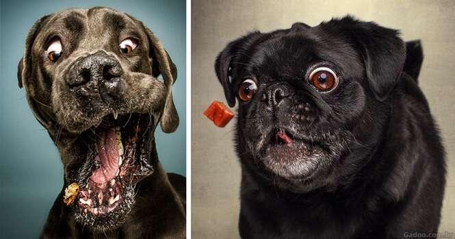 Fotos engraçadas mostram cães tentando pegar comida no ar