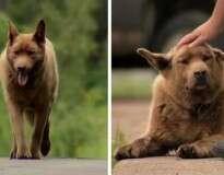 """Todos os dias esse cão idoso anda 6,5 quilômetros apenas para dar """"oi"""" às pessoas"""