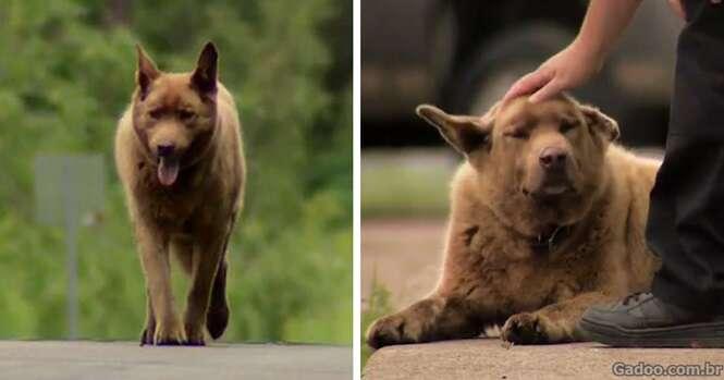 Todos os dias esse cão idoso anda 6,5 quilômetros
