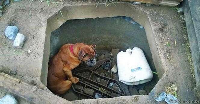 Uma criança viu uma cadela abandonada para morrer em uma cova de concreto e teve atitude ímpar