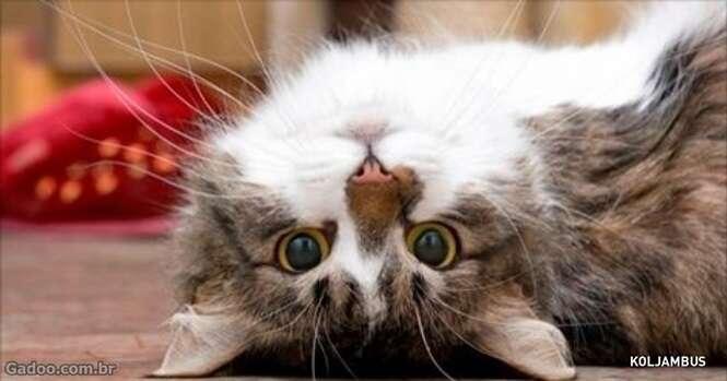 Cientistas finalmente explicam como os gatos prolongam nossas vidas