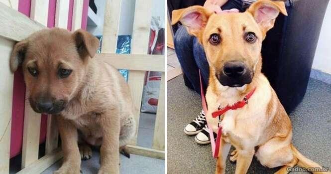 Animais antes e depois de serem levados ao abrigo