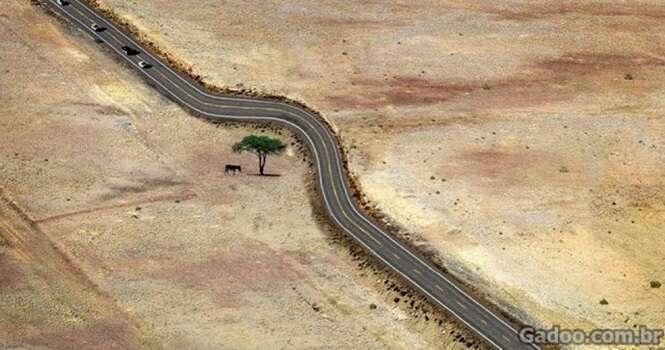 Obras que respeitaram a existência das árvores