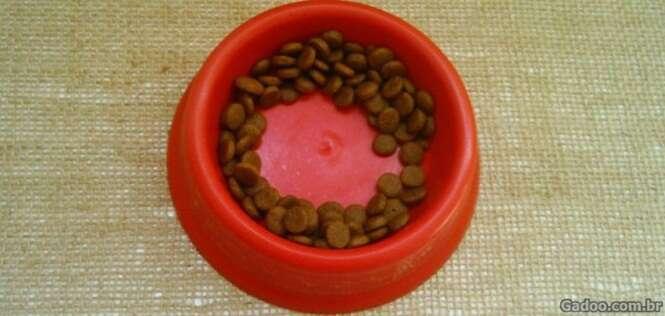 Você sabe por que os gatos deixam comida sobrando na beirada dos pratinhos?