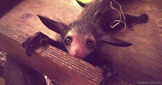 Animais que você talvez nunca tenha ouvido falar