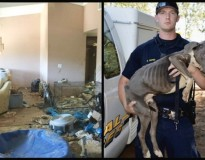 Quase 40 pitbulls são resgatados em uma casa velha e ganham uma segunda chance