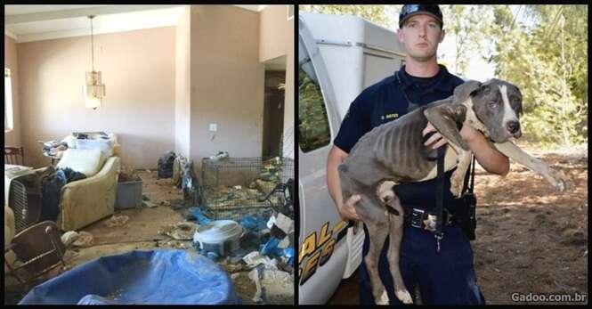 Quase 40 pitbulls são resgatados em uma casa velha