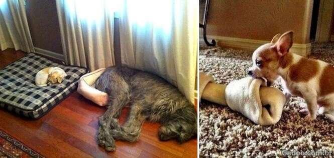 Fotos divertidas explicando a lógica dos cães