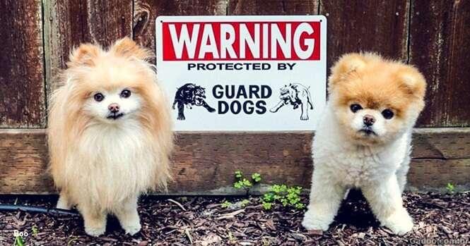 Cães cujos proprietários pensaram que fossem perigosos