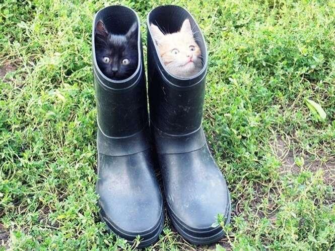 Foto: cat-tube