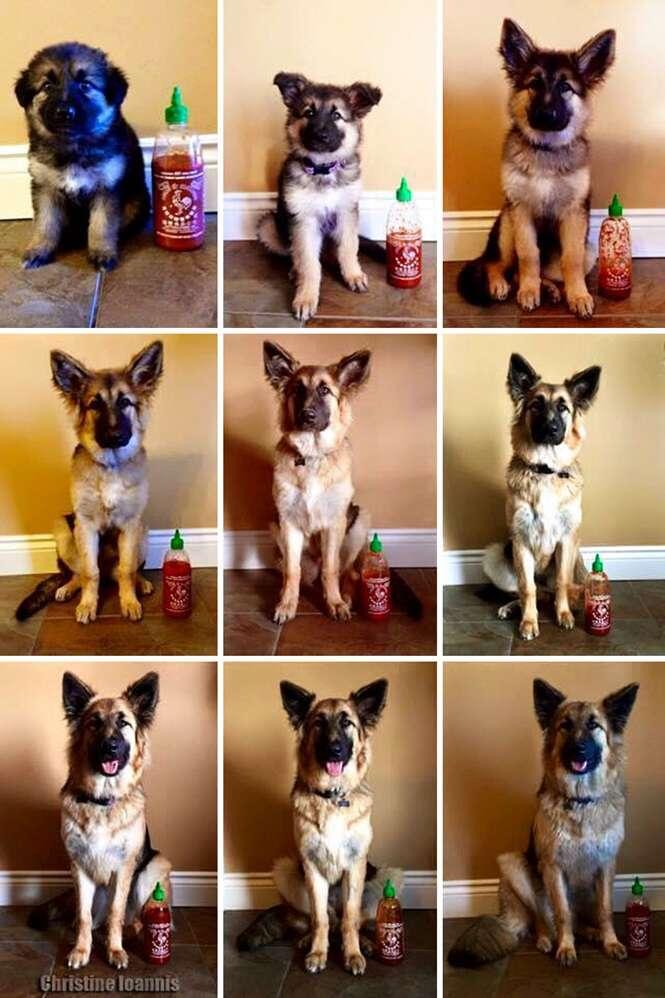 Dono documenta crescimento de seu cão usando garrafa como escala