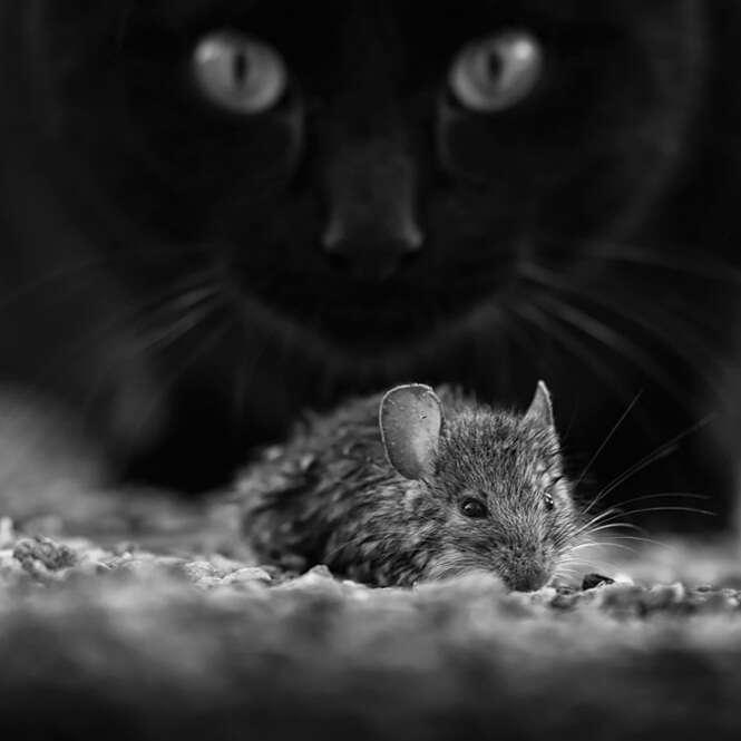 Foto: Francois Casanova