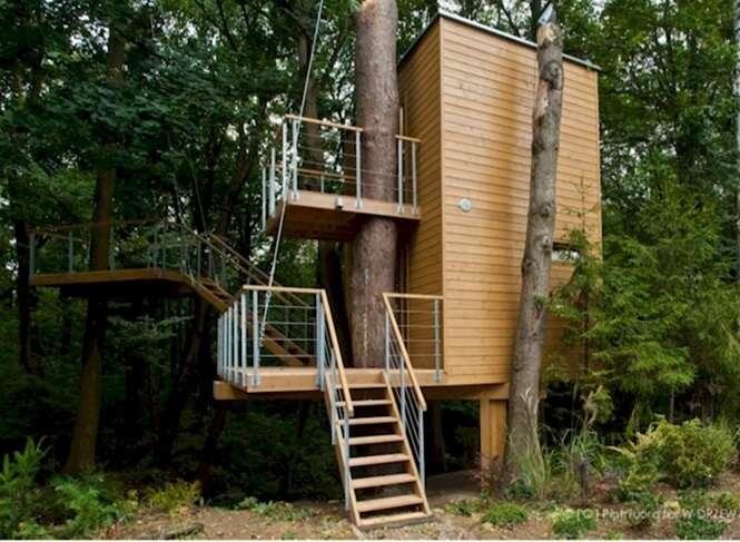 Foto: W Drzewach
