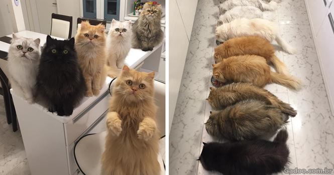 Esta mulher está levando o Instagram à loucura com seus 12 gatos persas