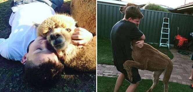Adolescente que não podia ter cão consegue alpaca