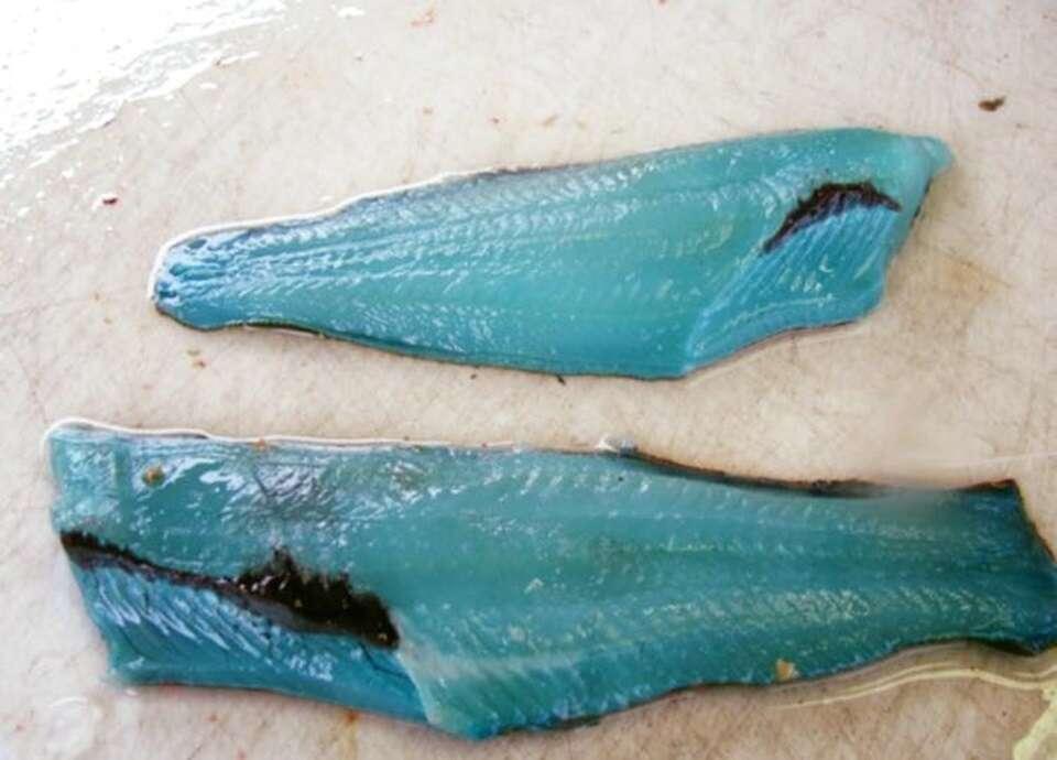 Esse peixe tem a carne totalmente azul