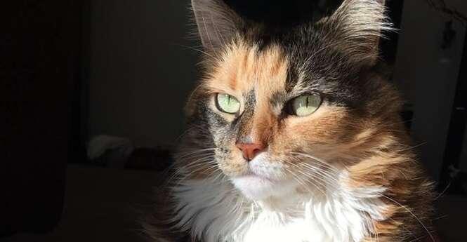 """31 gatos """"velhinhos"""" que vão encher até os corações mais frios com alegria"""