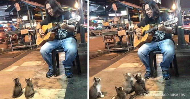 Vídeo: muitos passaram por este artista de rua, mas estes 4 gatinhos pararam